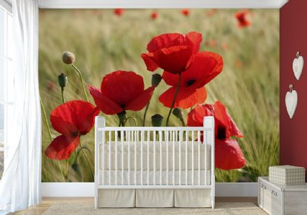 Red poppy flower wall mural wallpapers